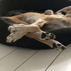 We aim for all our dogs to be happy and relaxed