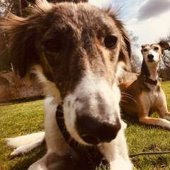 Hounds need help